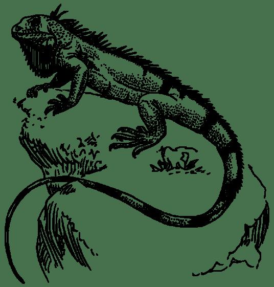 oksmith-iguana-800px
