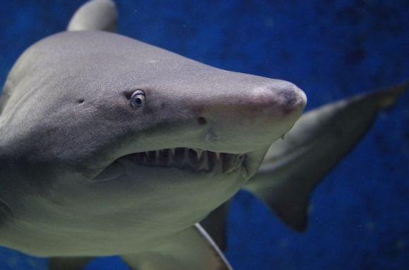 shark-674867__480