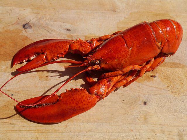 lobster-1726627__480