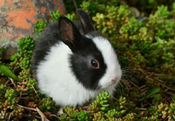 hare-2135472_1280