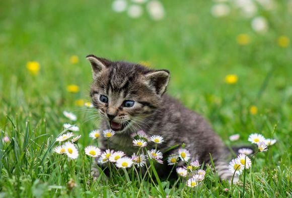 kitty-2948404__480