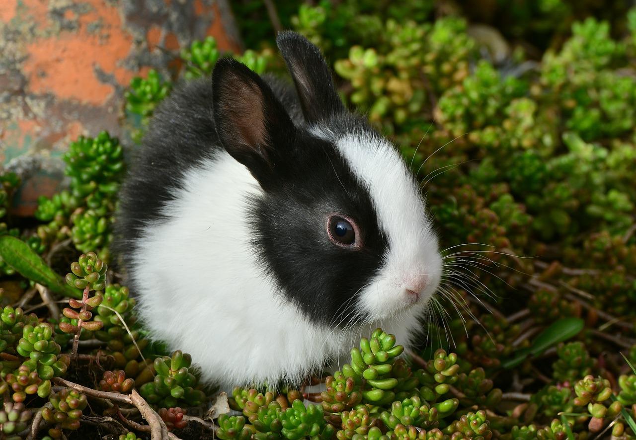 hare-2135472_1280 (1)